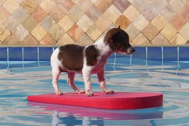 To pravé i pro Váš bazén